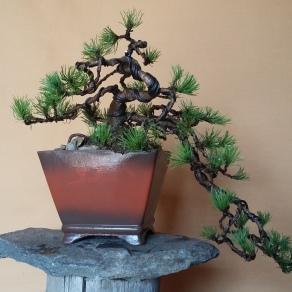 zahradnictvo-suslik-servis-predaj-bonsajov_03