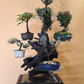 zahradnictvo-suslik-servis-predaj-bonsajov_01