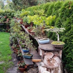 zahradnictvo-suslik-servis-predaj-bonsajov_04