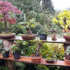 zahradnictvo-suslik-servis-predaj-bonsajov_05