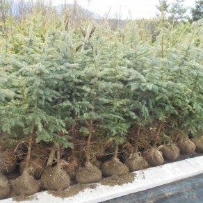 01_ing_milan_suslik_zahradnictvo_silveex-pripravene-na-predaj