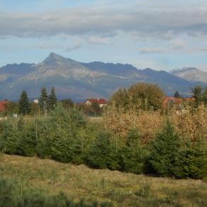 08_ing_milan_suslik_zahradnictvo_silveex_produkcia-v-horskych-podmienkach