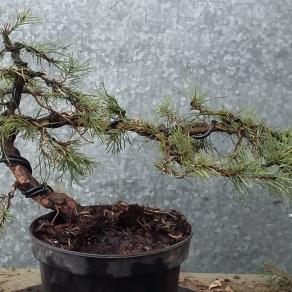 zahradnictvo-suslik-skola-o-bonsajoch_03