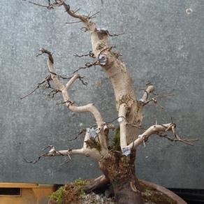 zahradnictvo-suslik-skola-o-bonsajoch_04