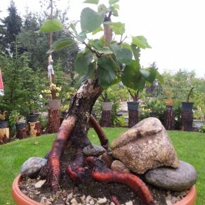 zahradnictvo-suslik-vlastne-bojsaje_01