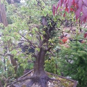 zahradnictvo-suslik-vlastne-bojsaje_02