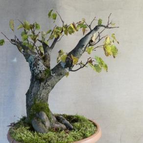 zahradnictvo-suslik-vlastne-bojsaje_14